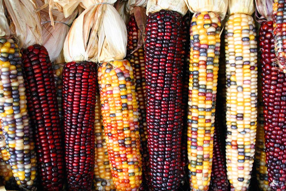 Heirloom corn. Ancestral Diet